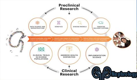 Pakar Nefrologi Sedang Berupaya Memajukan Penelitian Penyakit Ginjal